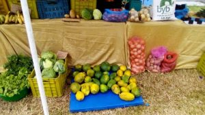 DRC: Bilanga ya Betu cooperative calls for the promotion of agricultural SMEs